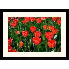 "<strong>Amanti Art</strong> Tulips Tulips by Andy Magee Framed Fine Art Print - 28.62"" x 38.62"""