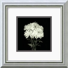 "<strong>Amanti Art</strong> Flower Series IX by Walter Gritsik Framed Fine Art Print - 11.99"" x 11.99"""