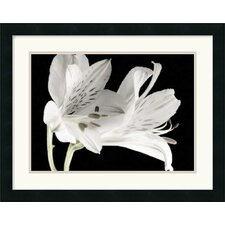 <strong>Amanti Art</strong> Lily I Framed Art Print by Dianne Poinski