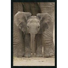 Big Ears Baby Elephant Framed Print