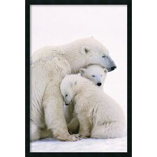 Polar Bear Family Framed Print