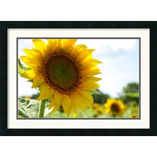 <strong>Amanti Art</strong> Sunflowers Framed Print by Andy Magee
