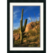 <strong>Amanti Art</strong> Sublime Sonoran Framed Print by Andy Magee