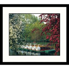 Cityscapes Boston Swan Boats Framed Photographic Print