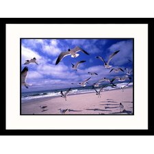 Gulls Flying Over Beach Framed Photograph - Martin Fox