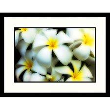 Florals Plumerias Framed Photographic Print