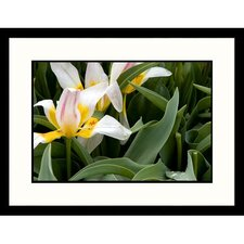 Florals Tulips Fully Opened Framed Photographic Print