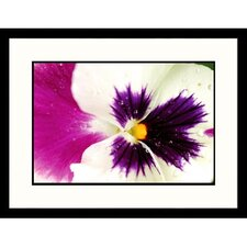 Florals Closeup of Orchid Framed Photographic Print