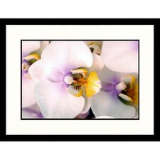 Florals White Orchids Framed Photographic Print