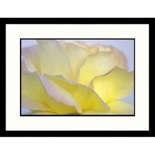 Florals White and Yellow Rose Framed Photographic Print