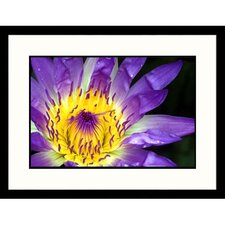 Florals Purple Water Lily Framed Photographic Print