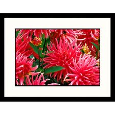 Dahlias Framed Photograph