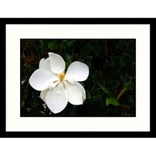 Florals White Magnolia Framed Photographic Print