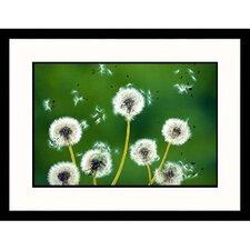 Florals Dandelions Framed Photographic Print