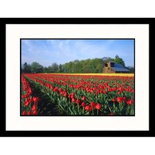 <strong>Great American Picture</strong> Tulip Field Framed Photograph
