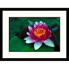 Florals Pink Water Lily Framed Photographic Print