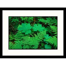 <strong>Great American Picture</strong> Fern Framed Photograph