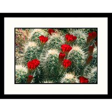 Florals Flowering Cacti Framed Photographic Print