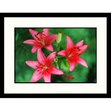 <strong>Great American Picture</strong> Pink Day Lilies Framed Photograph
