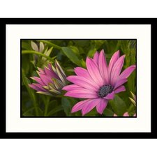 Florals Purple Daisy Framed Photographic Print