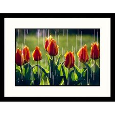 <strong>Great American Picture</strong> Rain on Red Tulips Framed Photograph