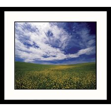 <strong>Great American Picture</strong> Field of Flowers Framed Photograph - Adam Jones
