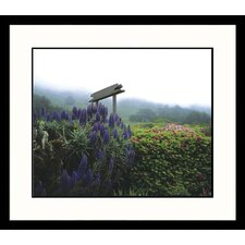 Landscapes California Mist Framed Photographic Print