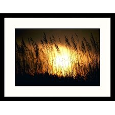 Landscapes 'Prairie Grass Ordway, South Dakota' by Frank Staub Framed Photographic Print