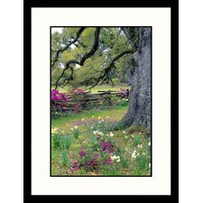 Landscapes 'Magnolia Plantation Garden, Charleston, South Carolina' by Jim Schwabel Framed Photographic Print