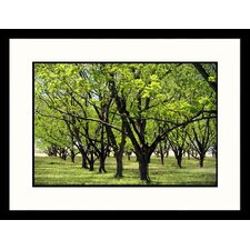 Landscapes 'Pecan Orchard Smith County, Texas' by Ray Hendley Framed Photographic Print