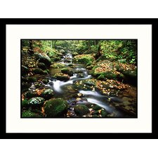 <strong>Great American Picture</strong> LeConte Creek, Great Smokey Mountains National Park, Tennessee Framed Photograph - David Davis