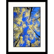 <strong>Great American Picture</strong> Aspen Treetops and Colorado Sky Framed Photograph - Karl Neumann