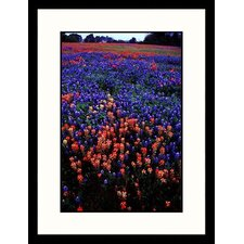 <strong>Great American Picture</strong> Washington State Park, Texas Framed Photograph - Sally Brown