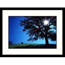 <strong>Great American Picture</strong> Sun and Oak California Framed Photograph - David Carriere