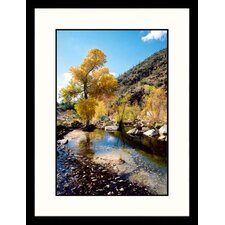 <strong>Great American Picture</strong> Yellow Tree Sabino Canyon, Tucson, Arizona Framed Photograph - James Denk