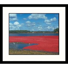 <strong>Great American Picture</strong> Cranberry Bog Framed Photograph