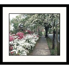 Landscapes Azaleas in Spring Framed Photographic Print