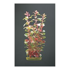 Marina Aquascaper Red Ludwigia Plant