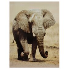 Walking Elephant Photographic Print on Canvas