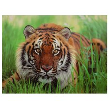 Crouching Tiger Photographic Print on Canvas