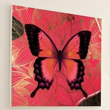 Metamorphosis Butterfly Framed Graphic Art