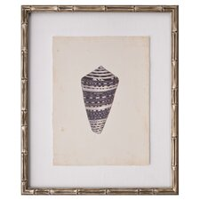 Mini Diderot Shell II Framed Graphic Art