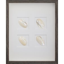Pearl Frog Clam Shells Wall Art Shadow Box in Brown