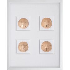 Sand Dollars Graphic Art Shadow Box
