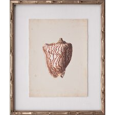 Mini Diderot Shells VII Framed Graphic Art