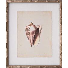 Mini Diderot Shells VIII Framed Graphic Art
