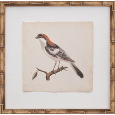 Mini De Langlois Bird I Framed Graphic Art