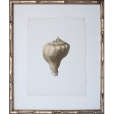 <strong>Mirror Image Home</strong> Vintage Shell III Art