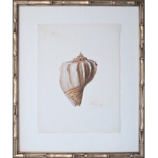 Vintage Shell V Framed Graphic Art