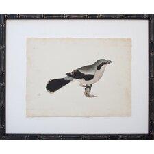 Vintage Bird IV Framed Graphic Art